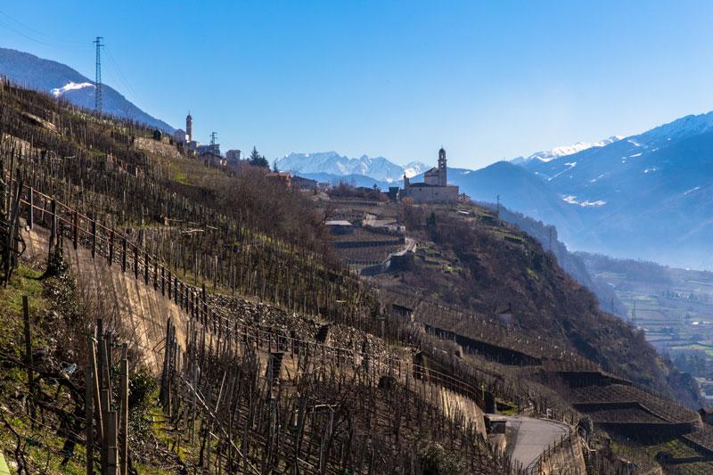 viticoltura-01