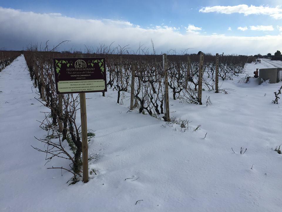 Feudi di Guagnano con la neve