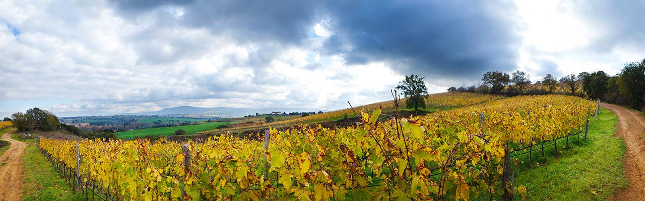 vigne poggio argentato